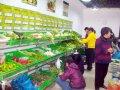 卖蔬菜的经验,我做蔬菜生意的那些年